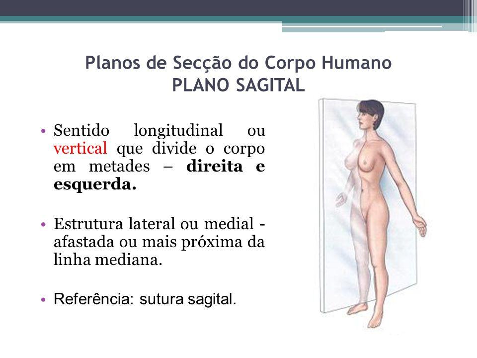 Planos de Secção do Corpo Humano PLANO SAGITAL