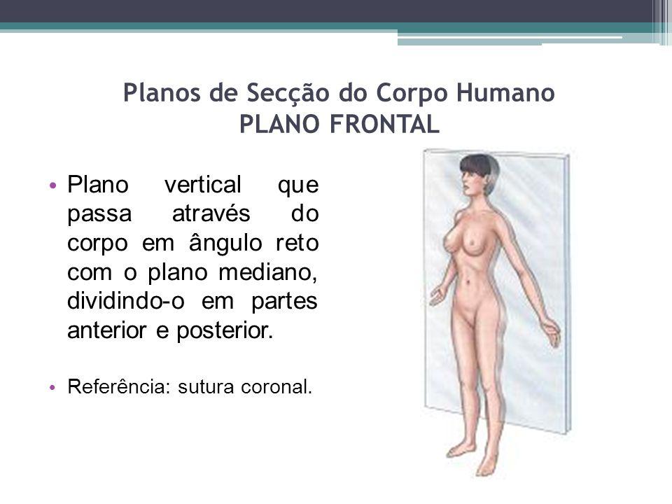 Planos de Secção do Corpo Humano PLANO FRONTAL