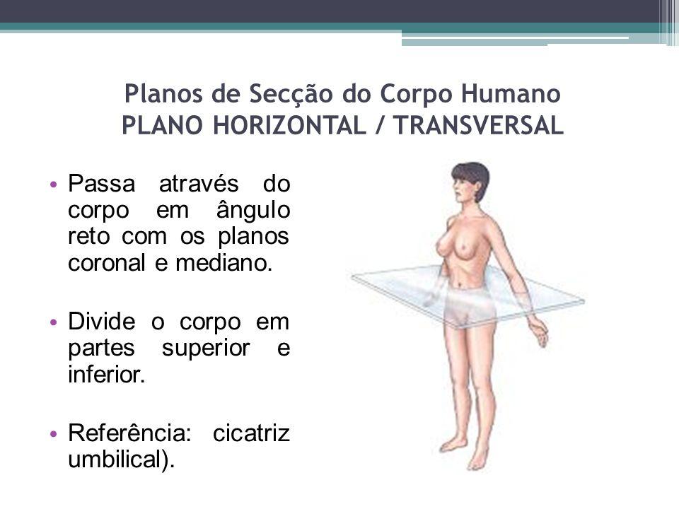Planos de Secção do Corpo Humano PLANO HORIZONTAL / TRANSVERSAL