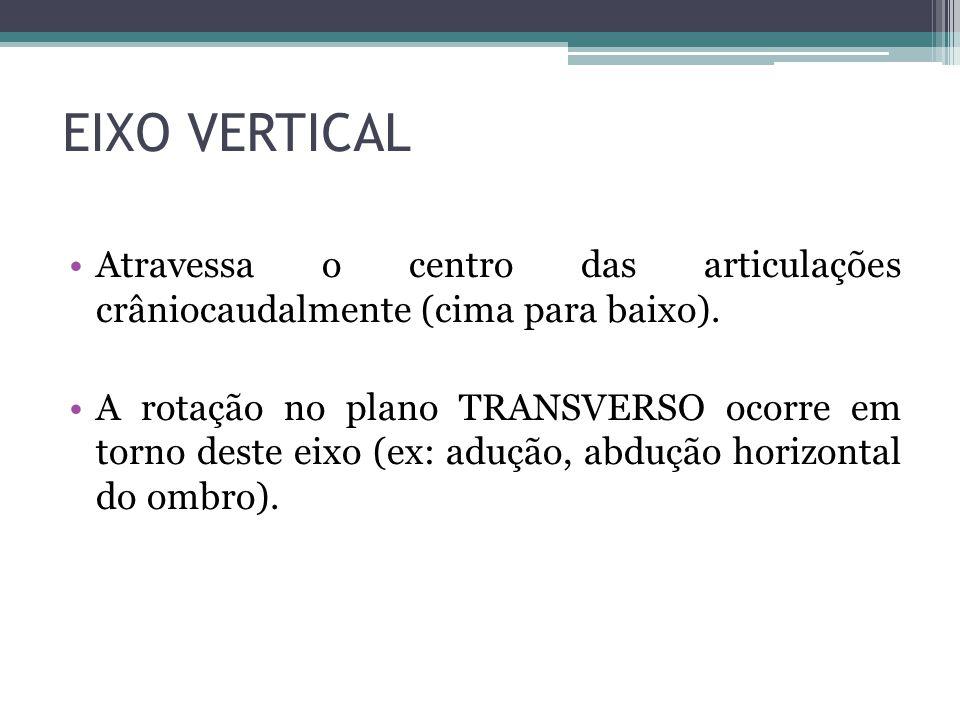 EIXO VERTICAL Atravessa o centro das articulações crâniocaudalmente (cima para baixo).