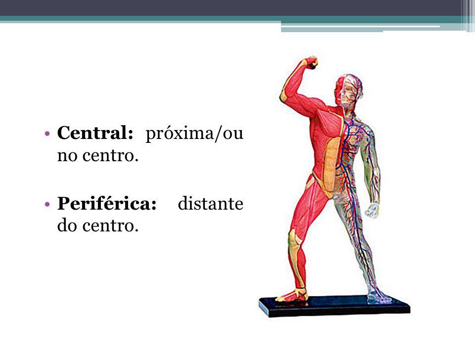Central: próxima/ou no centro.