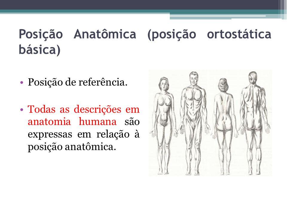 Posição Anatômica (posição ortostática básica)