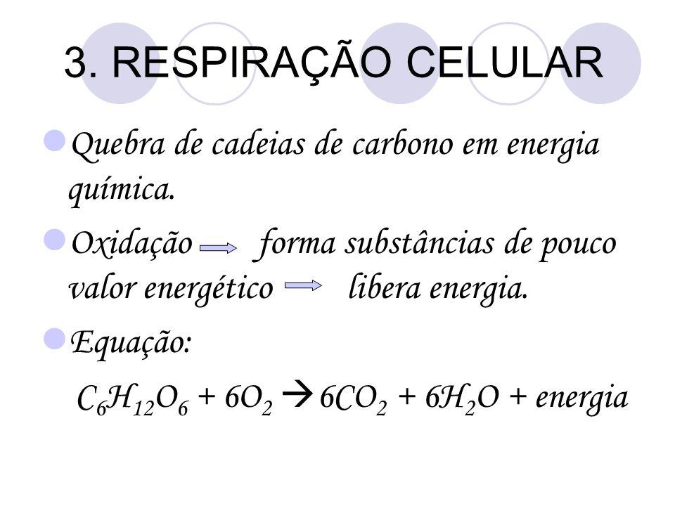 3. RESPIRAÇÃO CELULAR Quebra de cadeias de carbono em energia química.