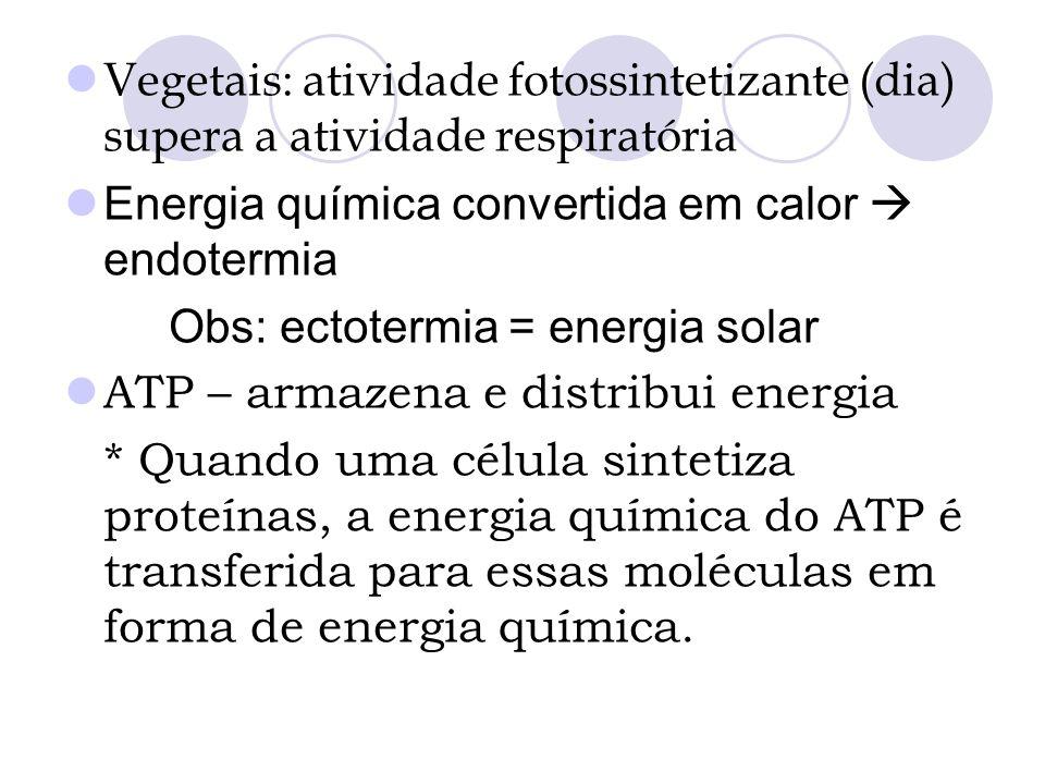 Vegetais: atividade fotossintetizante (dia) supera a atividade respiratória