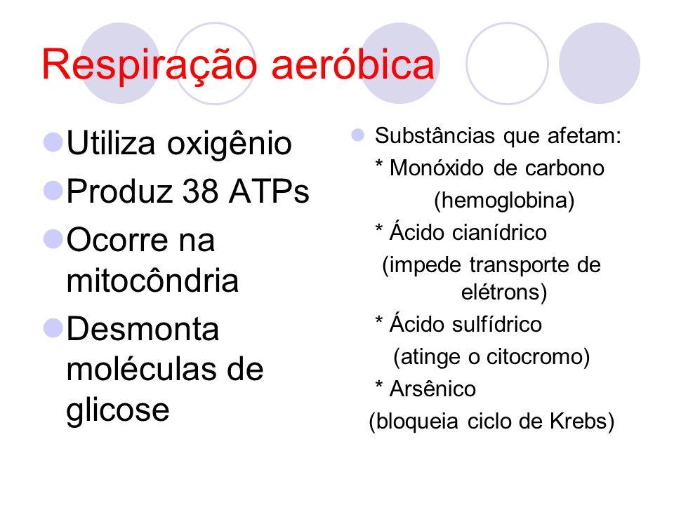 Respiração aeróbica Utiliza oxigênio Produz 38 ATPs