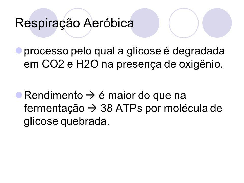 Respiração Aeróbicaprocesso pelo qual a glicose é degradada em CO2 e H2O na presença de oxigênio.