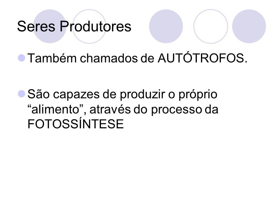 Seres Produtores Também chamados de AUTÓTROFOS.