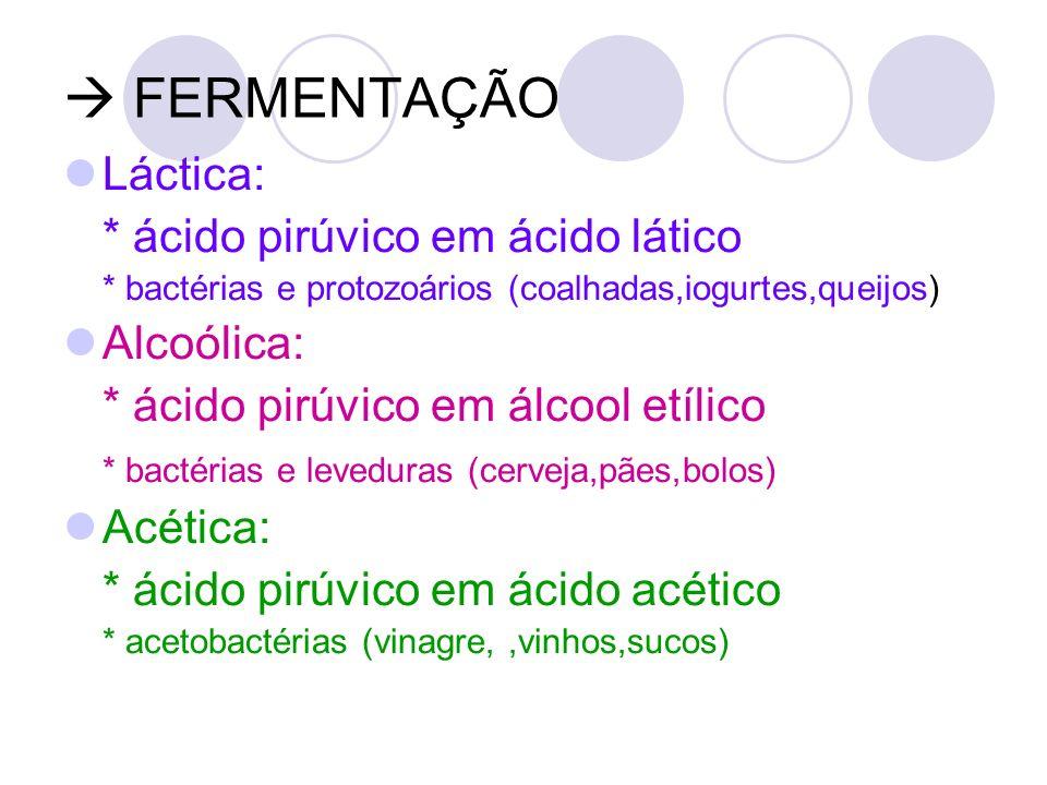  FERMENTAÇÃO Láctica: * ácido pirúvico em ácido lático Alcoólica: