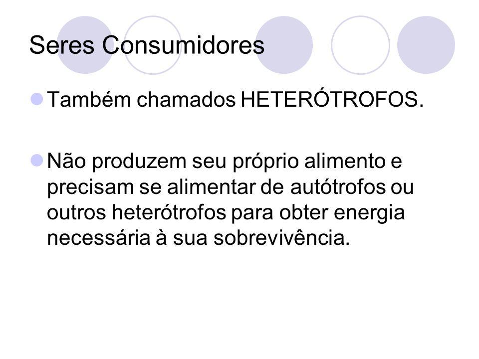 Seres Consumidores Também chamados HETERÓTROFOS.