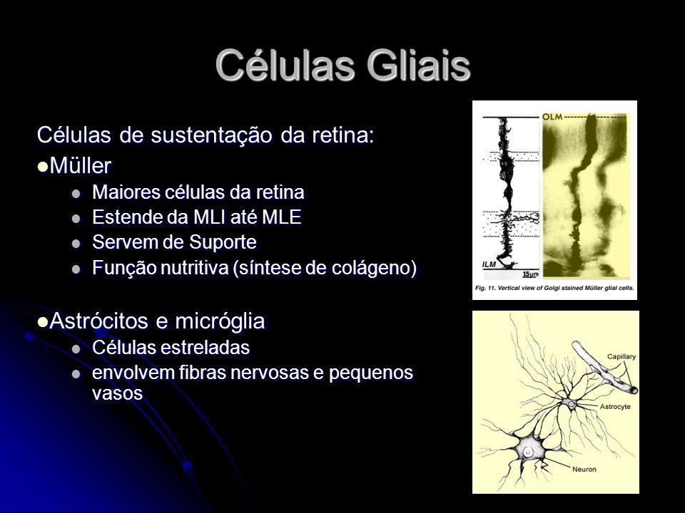 Células Gliais Células de sustentação da retina: Müller