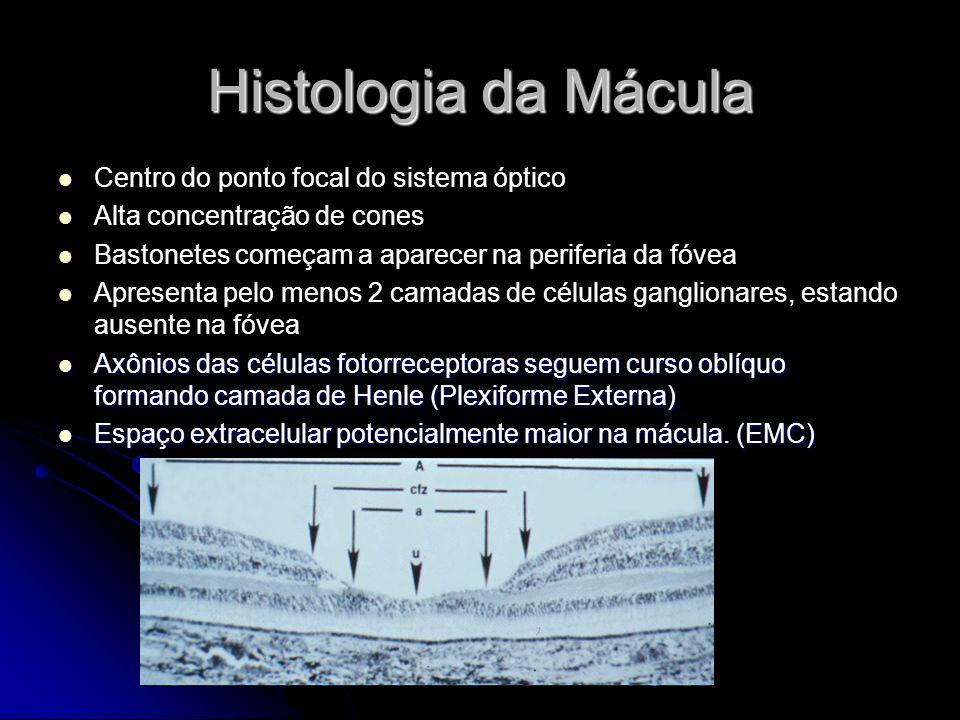 Histologia da Mácula Centro do ponto focal do sistema óptico