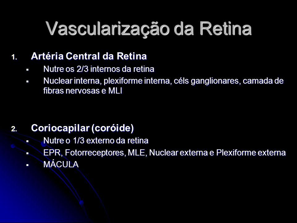 Vascularização da Retina