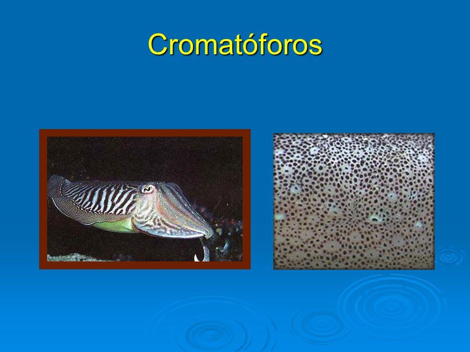 Cromatóforos