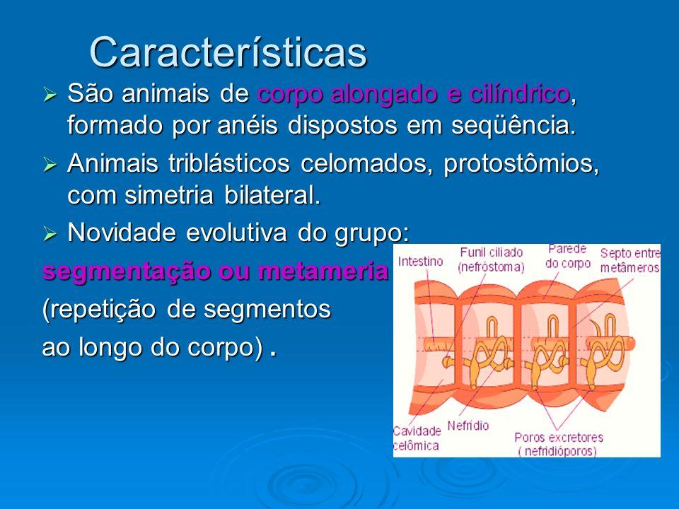 Características São animais de corpo alongado e cilíndrico, formado por anéis dispostos em seqüência.