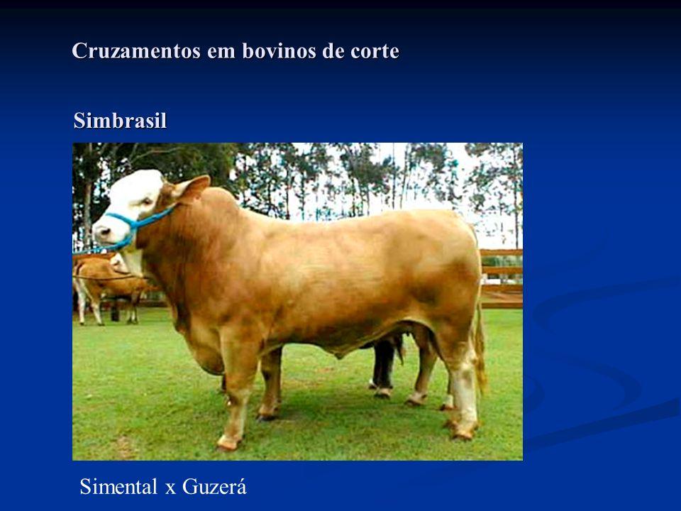 Cruzamentos em bovinos de corte