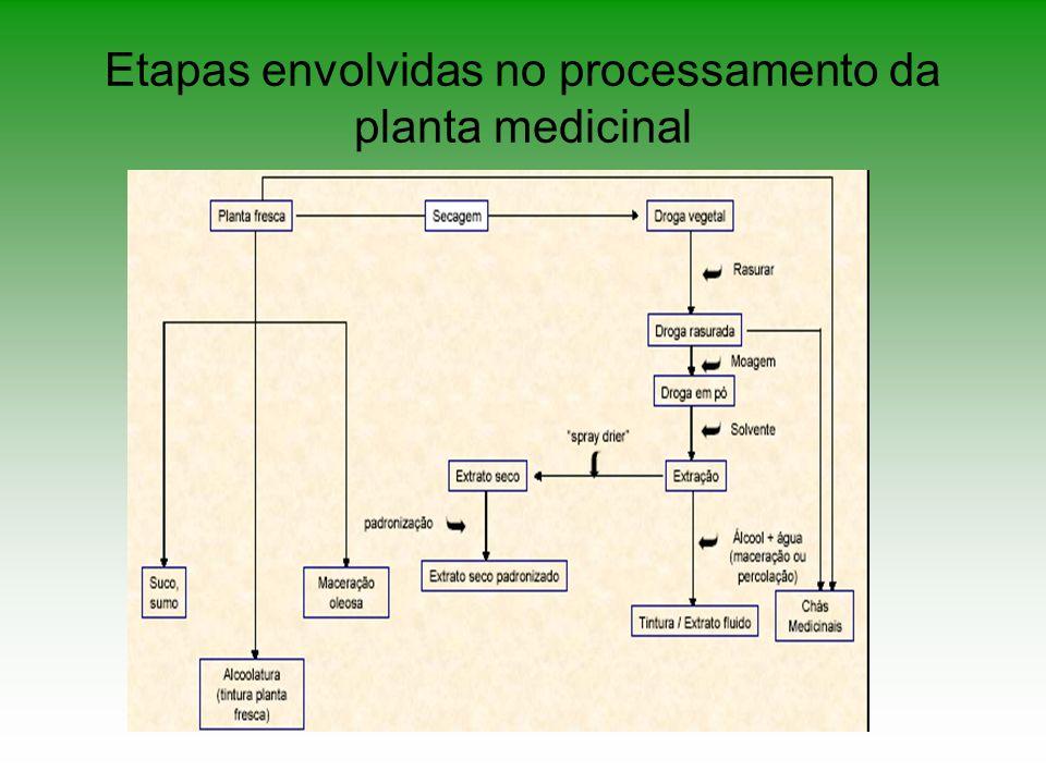 Etapas envolvidas no processamento da planta medicinal