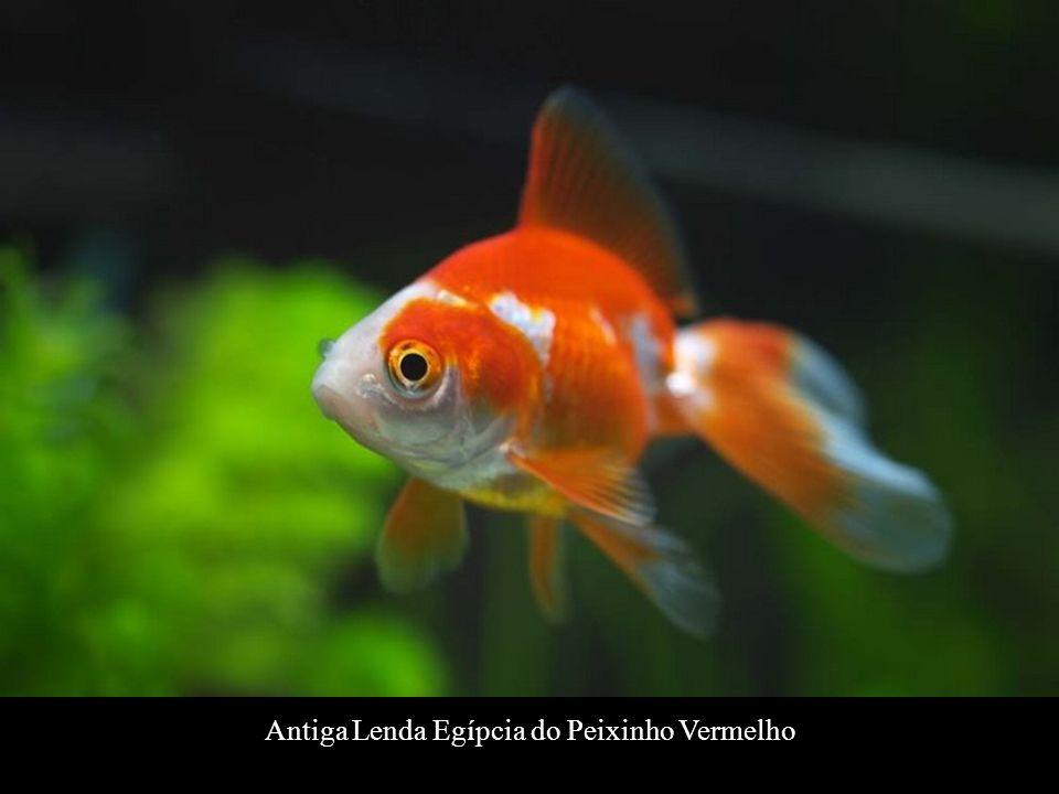 Antiga Lenda Egípcia do Peixinho Vermelho