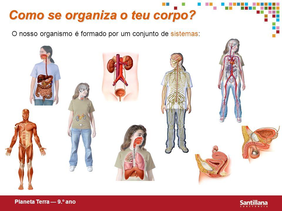 Como se organiza o teu corpo