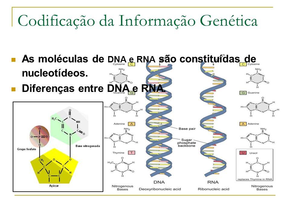 Codificação da Informação Genética