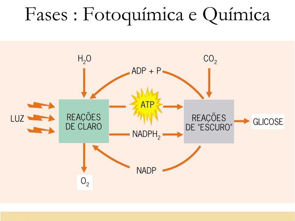 Fases : Fotoquímica e Química