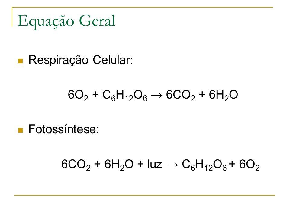 Equação Geral Respiração Celular: 6O2 + C6H12O6 → 6CO2 + 6H2O