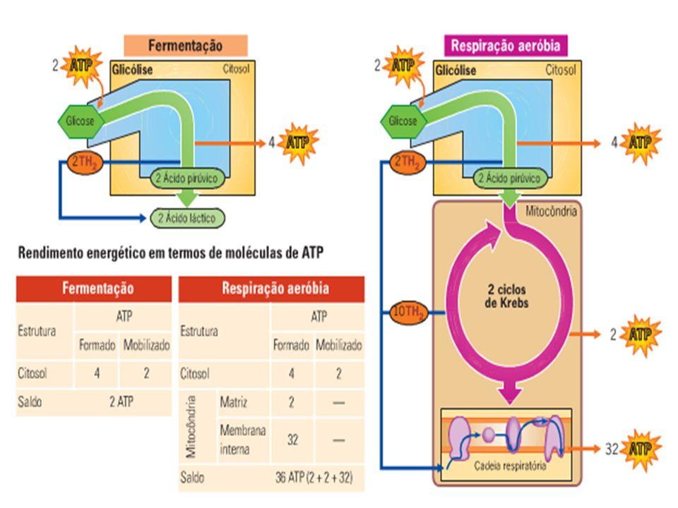 Mapa Metabólico