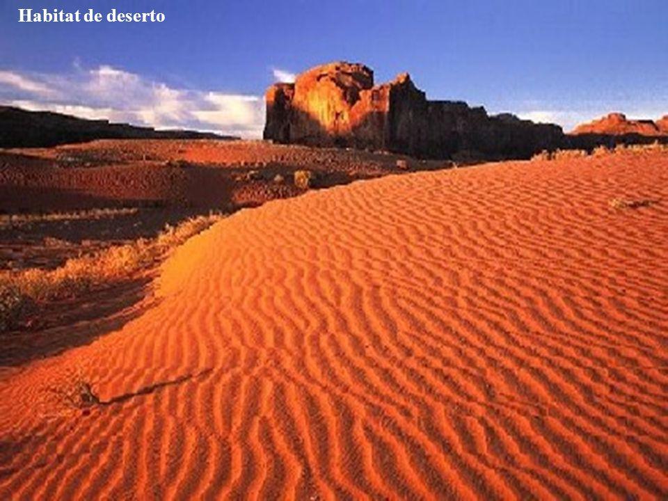 Habitat de deserto Habitat desértico