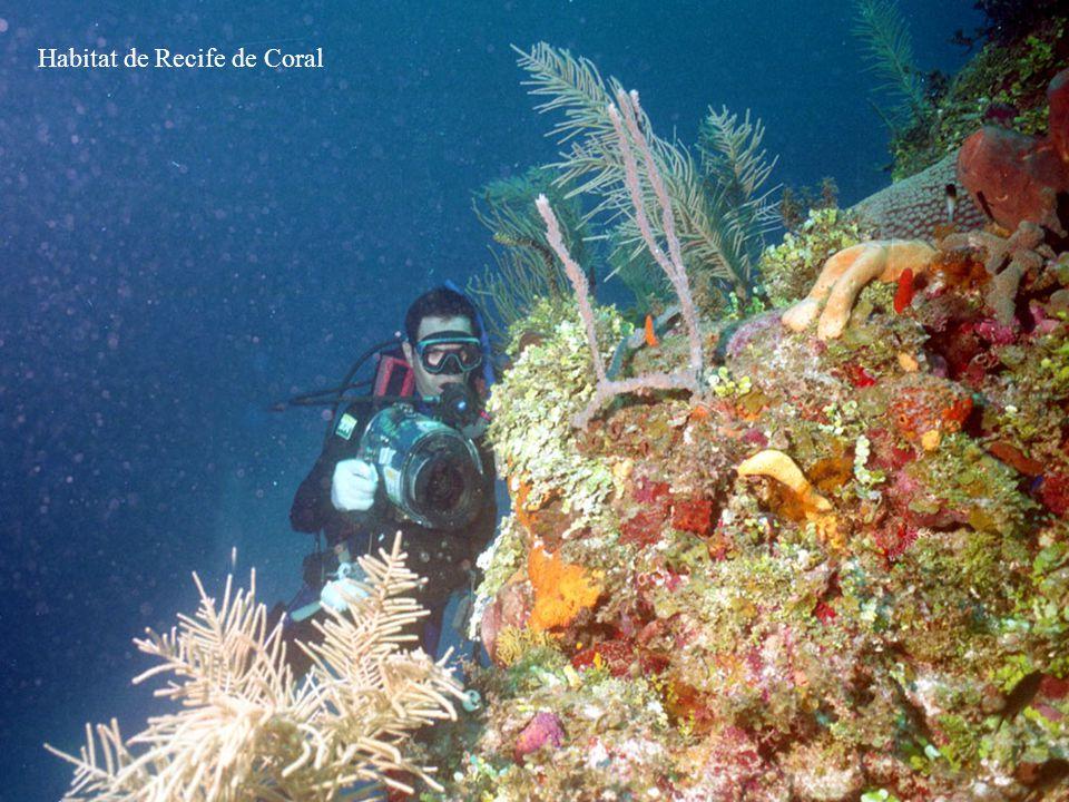 Habitat de Recife de Coral