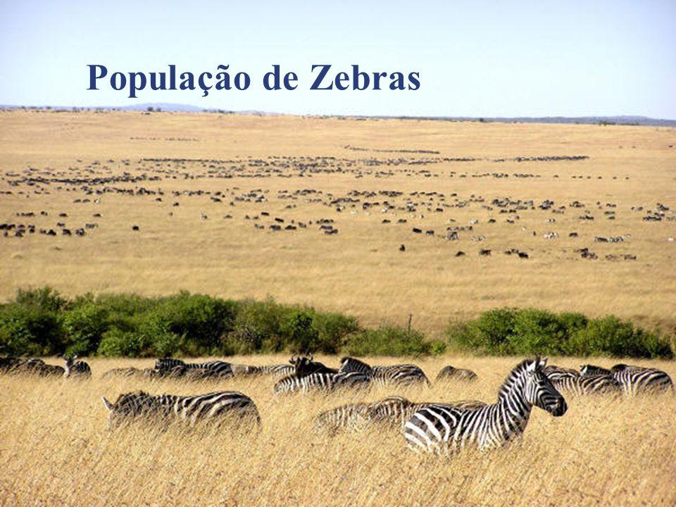 População de Zebras