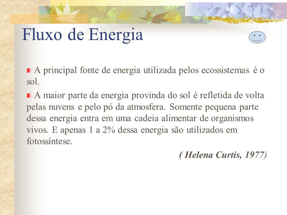 Fluxo de Energia A principal fonte de energia utilizada pelos ecossistemas é o sol.