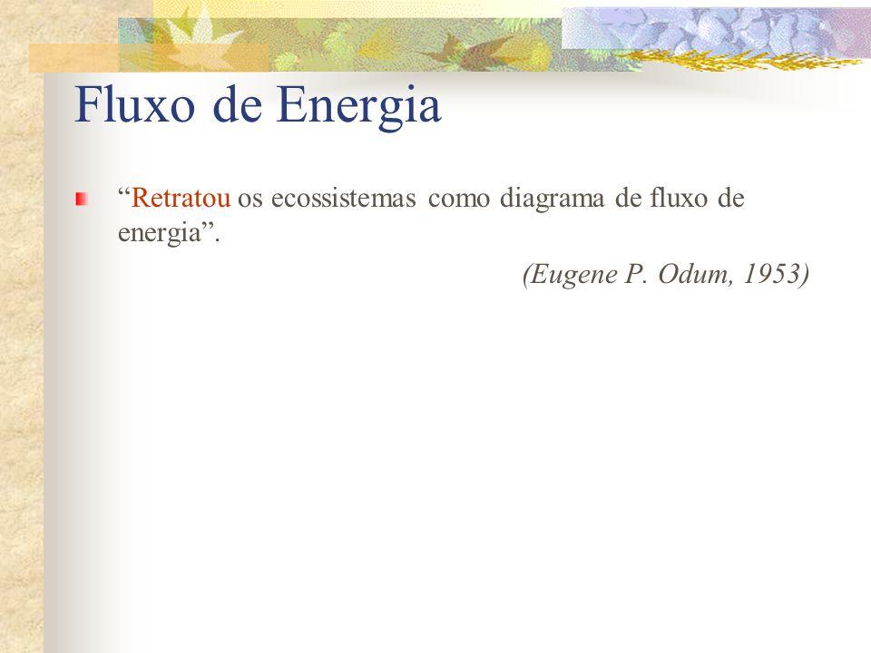 Fluxo de Energia Retratou os ecossistemas como diagrama de fluxo de energia .