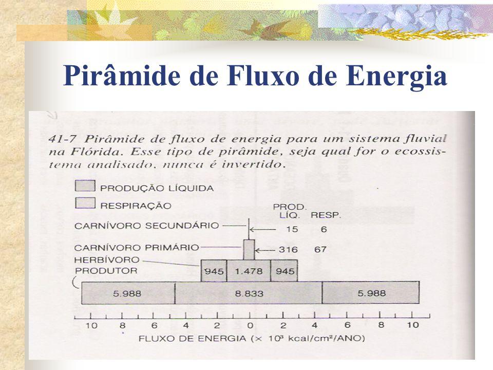 Pirâmide de Fluxo de Energia