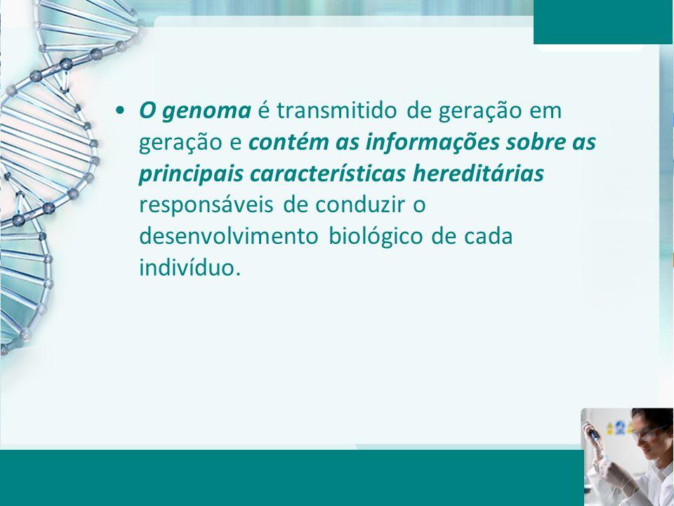 O genoma é transmitido de geração em geração e contém as informações sobre as principais características hereditárias responsáveis de conduzir o desenvolvimento biológico de cada indivíduo.