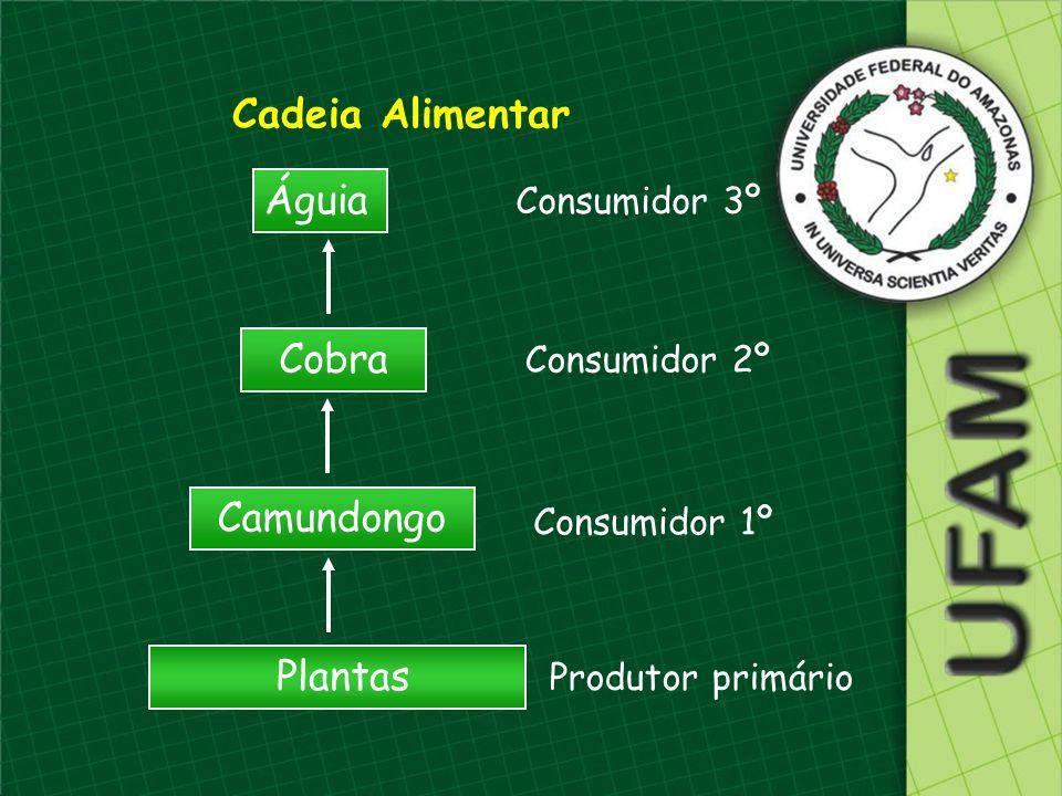 Cadeia Alimentar Águia Cobra Camundongo Plantas Consumidor 3º