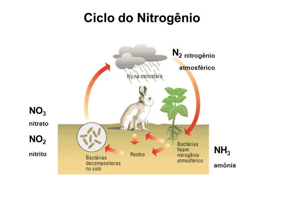 Ciclo do Nitrogênio N2 nitrogênio atmosférico NO3 NO2 nitrito NH3