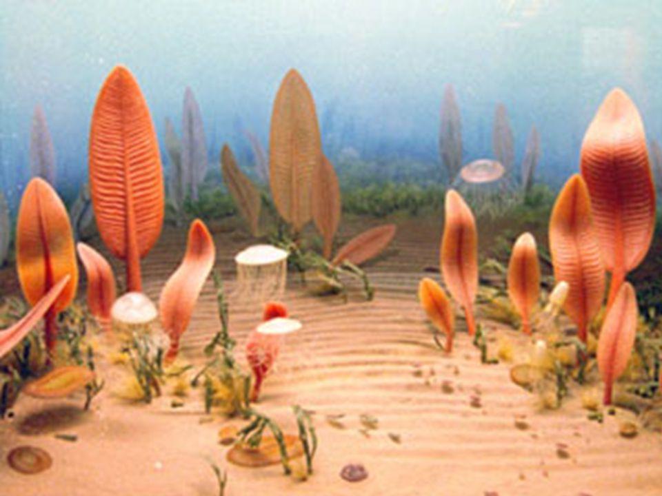 Fauna de Ediacara – os primeiros registros de animais