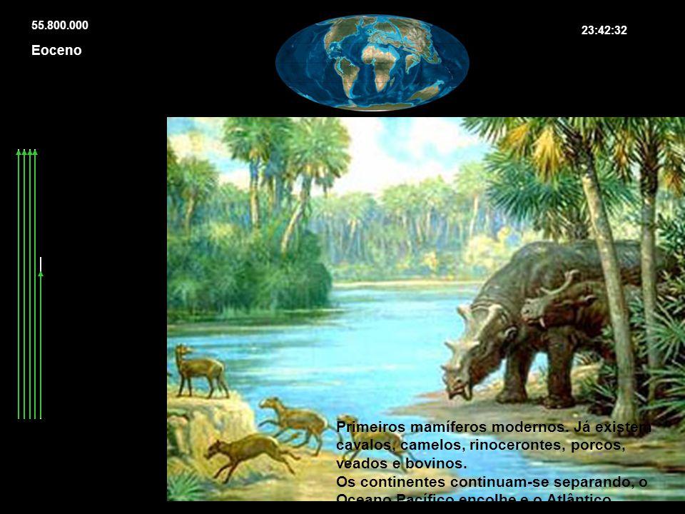 55.800.000 23:42:32. Eoceno. Primeiros mamíferos modernos. Já existem cavalos, camelos, rinocerontes, porcos, veados e bovinos.