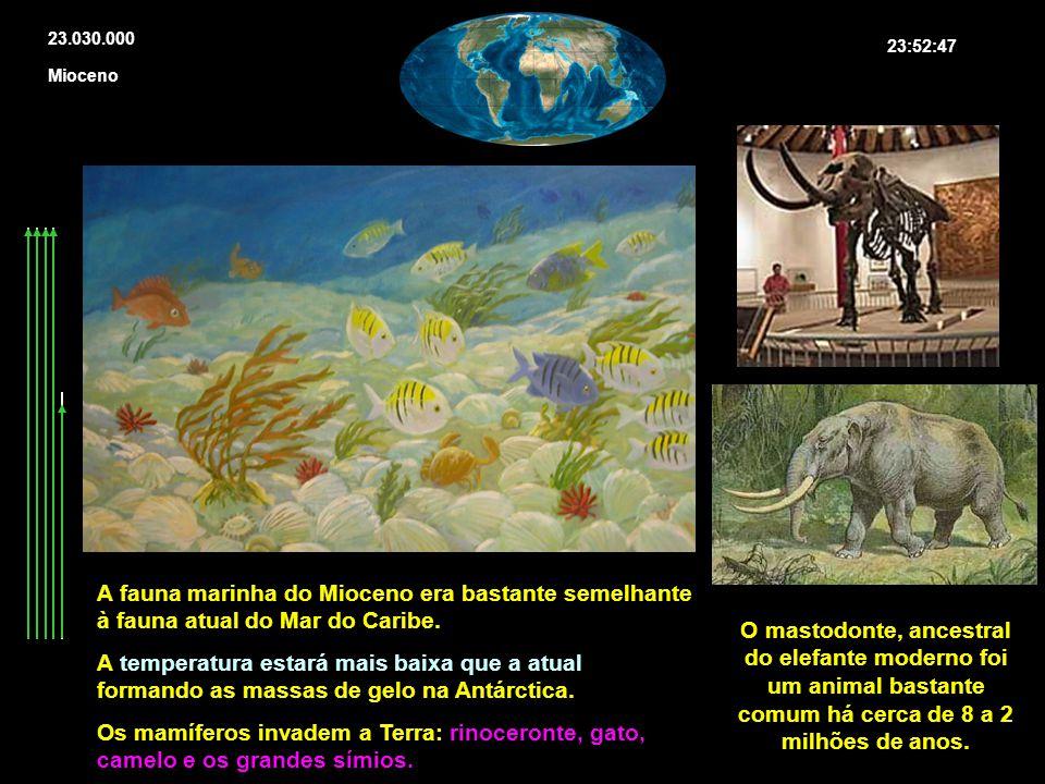 23.030.000 23:52:47. Mioceno. A fauna marinha do Mioceno era bastante semelhante à fauna atual do Mar do Caribe.