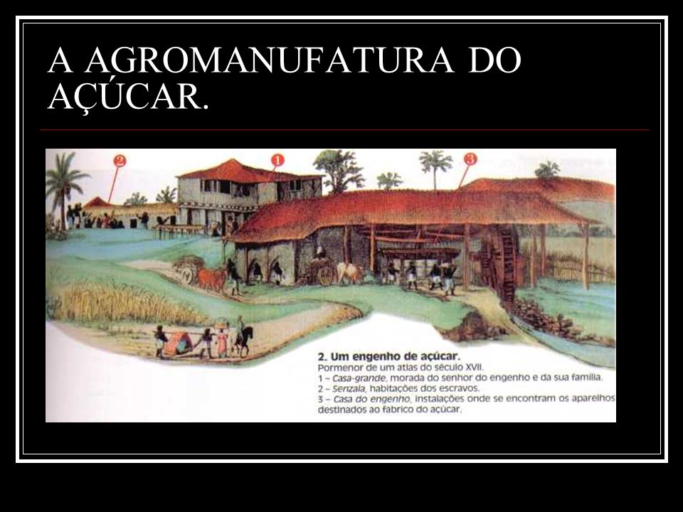 A AGROMANUFATURA DO AÇÚCAR.