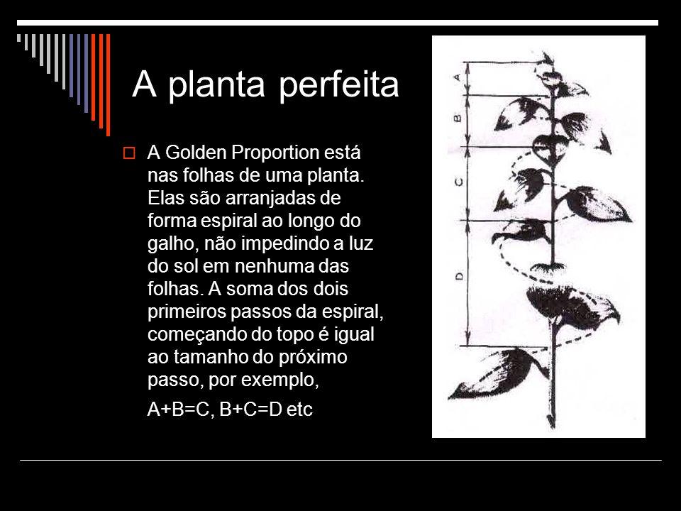 A planta perfeita