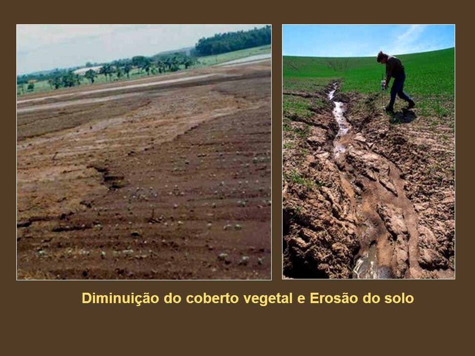 Diminuição do coberto vegetal e Erosão do solo