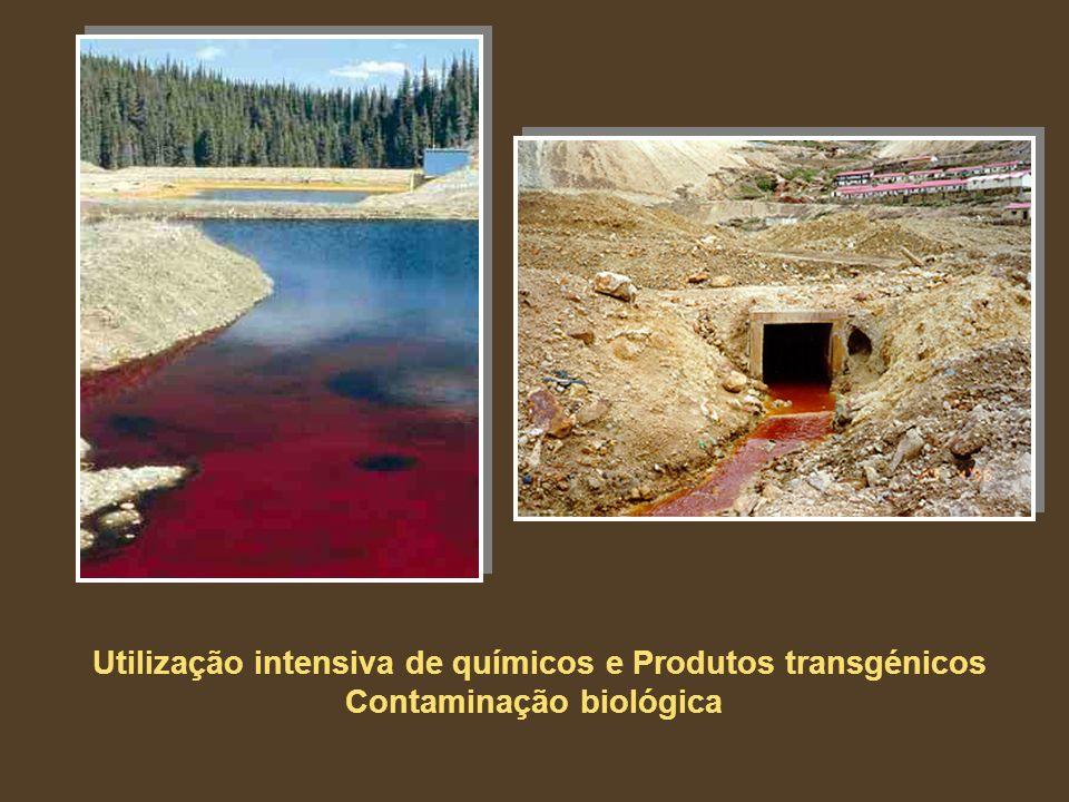 Utilização intensiva de químicos e Produtos transgénicos