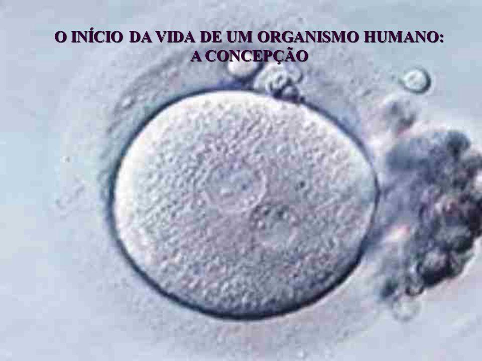 O INÍCIO DA VIDA DE UM ORGANISMO HUMANO: