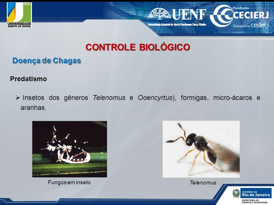 CONTROLE BIOLÓGICO Doença de Chagas Predatismo