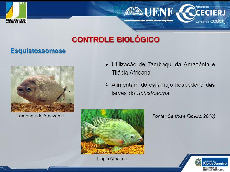 CONTROLE BIOLÓGICO Esquistossomose