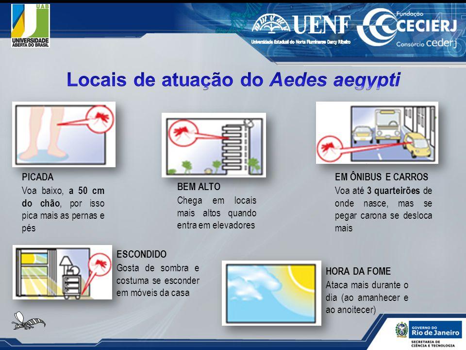 Locais de atuação do Aedes aegypti