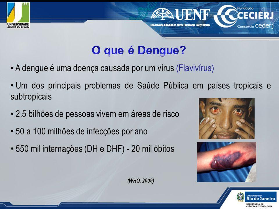 O que é Dengue A dengue é uma doença causada por um vírus (Flavivírus)
