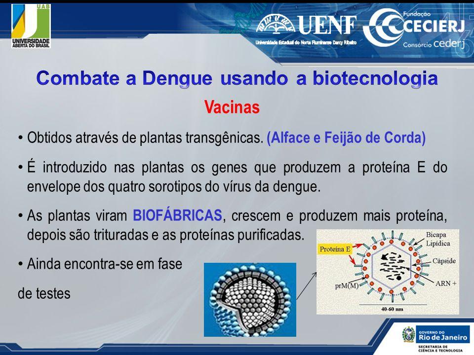 Combate a Dengue usando a biotecnologia