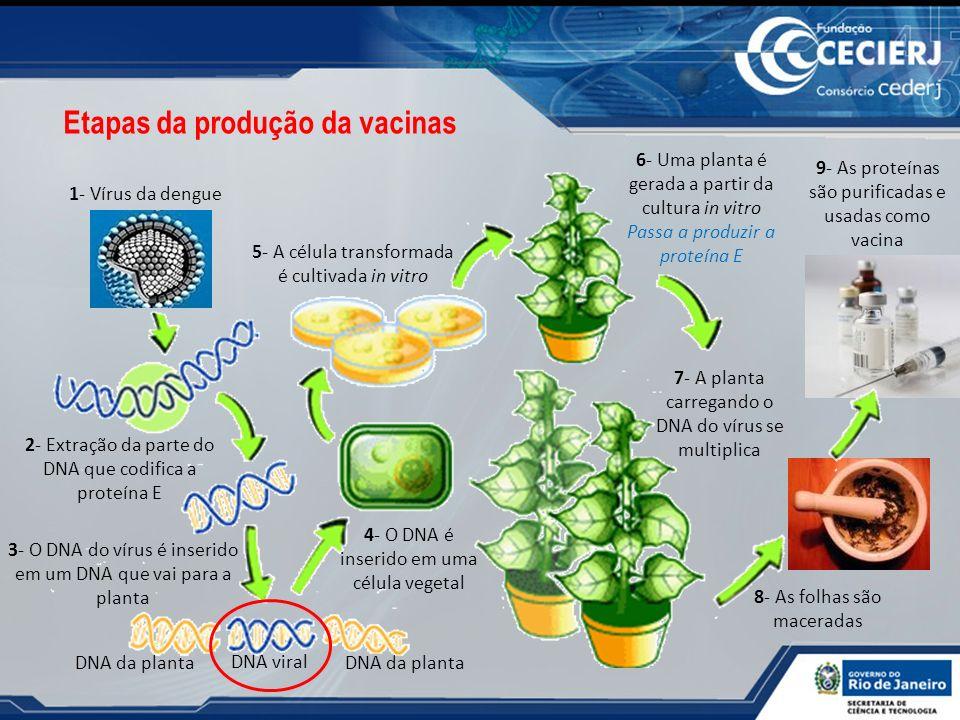 Etapas da produção da vacinas