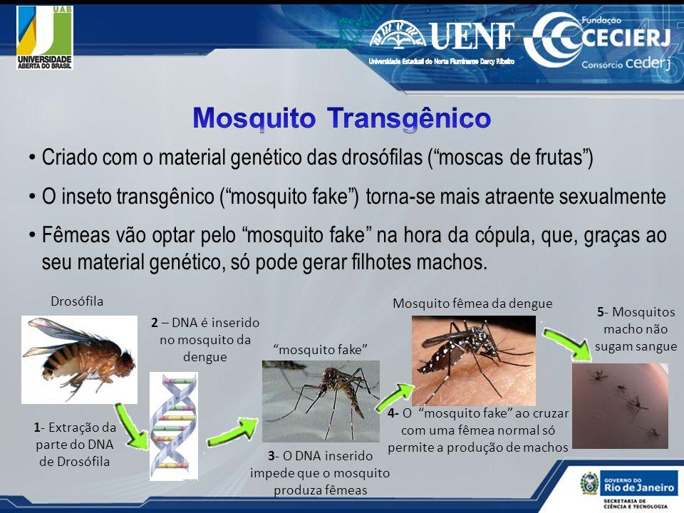 Mosquito TransgênicoCriado com o material genético das drosófilas ( moscas de frutas )
